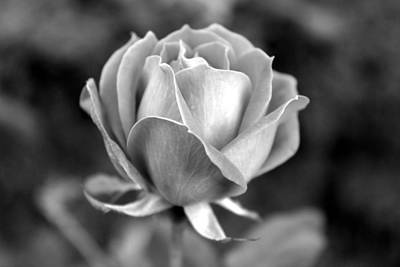 Photograph - Rose - Bw by Beth Vincent