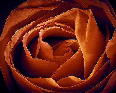 Photograph - Rose  by Charles Muhle