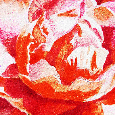 Painting - Rose Close Up Watercolor Painting by Irina Sztukowski