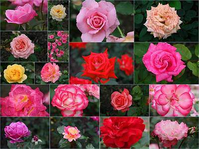Photograph - Rose Collage 3 by Allen Beatty