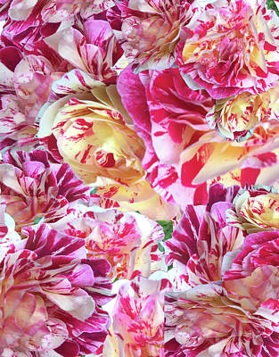 Photograph - Rose Collage by Barbara Jacobs