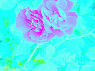 Photograph - Rose Colored Dream by Greg Moores