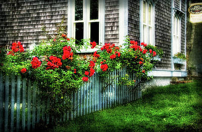 Photograph - Rose-covered Fence In Shelburne Ns by Carolyn Derstine