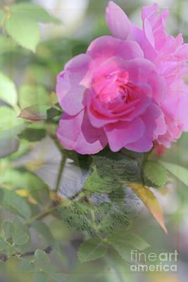 Digital Art - Rose V2 by Donna L Munro
