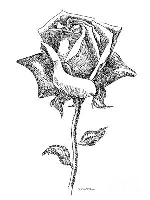 Rose Drawings Black-white 5 Art Print