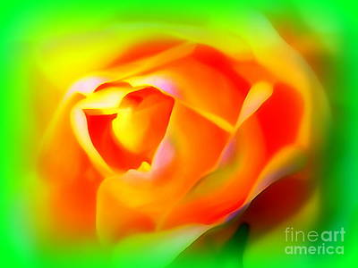 Photograph - Rose Dreams by Ed Weidman