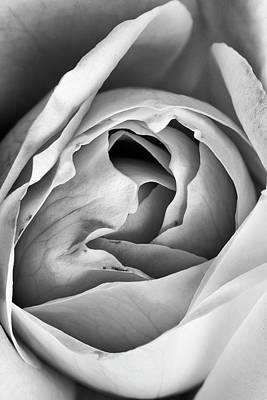 Photograph - Rose Elegance In Monochrome by Vishwanath Bhat
