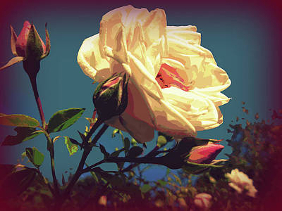 Rose Facing The Sun Art Print