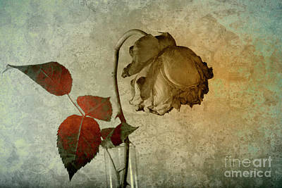 Photograph - Rose Flower In A Vase 1 by Heiko Koehrer-Wagner