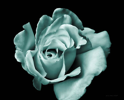Photograph - Rose Flower In Teal Green by Jennie Marie Schell