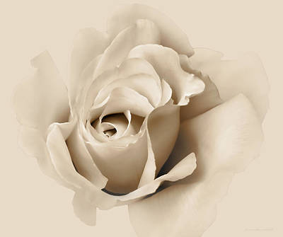 Photograph - Rose Flower Soft Beige by Jennie Marie Schell