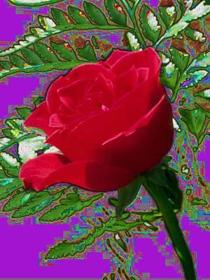 Photograph - Rose For You by Tim Allen