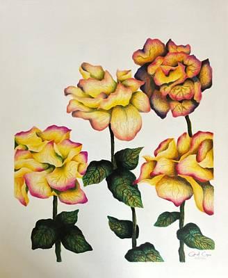 Drawing - Rose by Gabriel Cajina