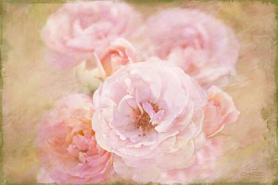 Photograph - Rose Garden 1 by Jill Love