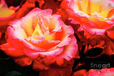 Photograph - Rose Garden by Bruce Block