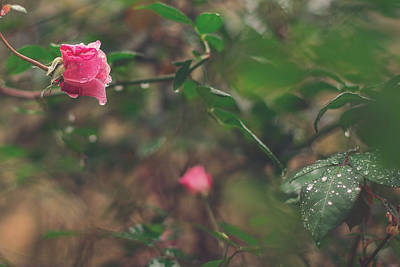 Photograph - Rose Garden by Jessica Brown