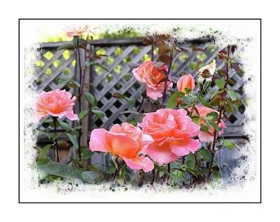 Photograph - Rose Garden by Leslie Hunziker