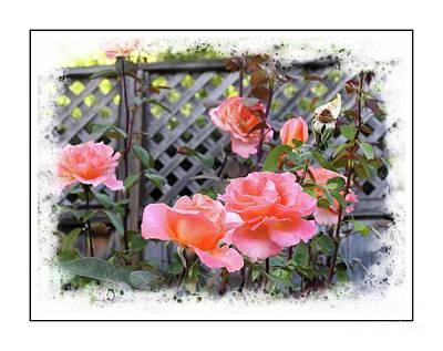 Photograph - Rose Garden by Leslie Hunziker