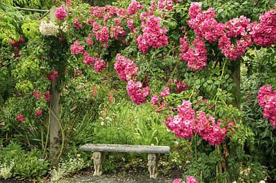 Photograph - Romantic Rose Garden by Marilyn Wilson