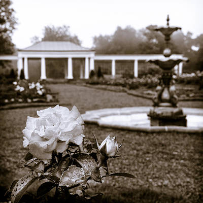 Photograph - Rose Garden Monochrome by Chris Bordeleau