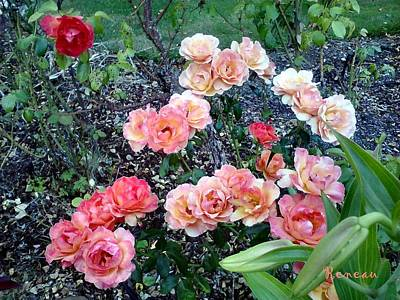 Photograph - Rose Garden by Sadie Reneau