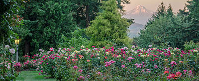 Photograph - Rose Garden View by Don Schwartz