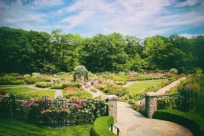 Photograph - Rose Garden Views by Jessica Jenney