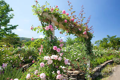 Photograph - Rose Gate by Aiolos Greek Collections