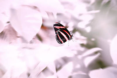 Beautiful Butterfly Photograph - Rose Glass Story by Jaroslav Buna
