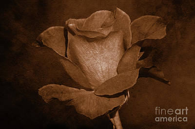 Photograph - Rose Gold by Debby Pueschel