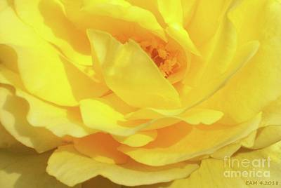 Digital Art - Rose / Golden Beauty by Elizabeth McTaggart