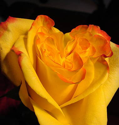 Art Print featuring the photograph Rose Heart by Margaret Bobb