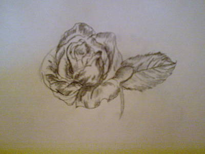 Drawing - Rose by Helen Vanterpool