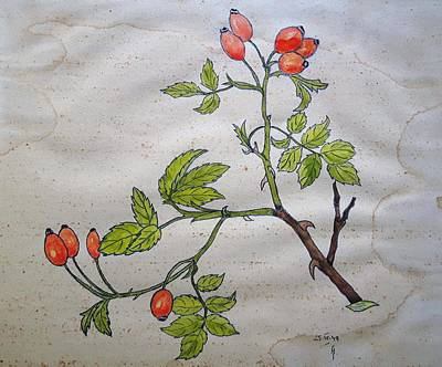 Rose Hip Art Print by Thomas M Pikolin