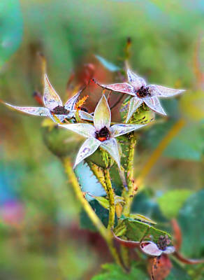 Photograph - Rose Hips In Fall by Renee Marie Martinez