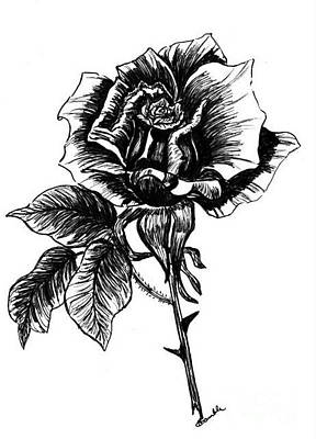 rose I  Print by Nancy Rucker