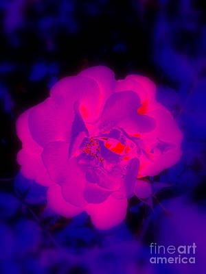 Photograph - Rose Illumination - 1 by Greg Moores