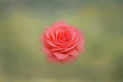 Art Print featuring the photograph Rose Impressions by Kim Hojnacki