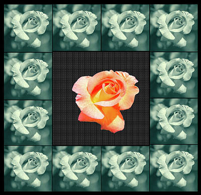 Digital Art - Rose In A Box Of Roses by Constance Lowery