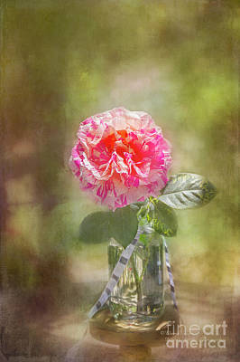 Photograph - Rose In A Jar by Elaine Teague