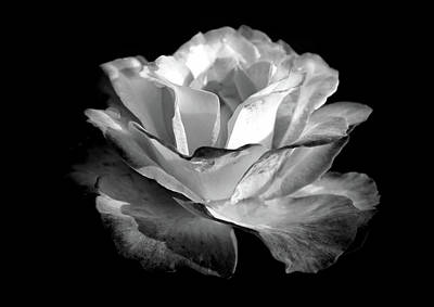 Photograph - Rose In Black And White 5 by Lilia D