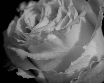 Photograph - Rose In Black And White by Betty Northcutt