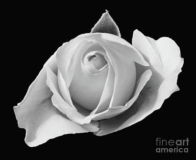 Photograph - Rose In Black And White by Cindy Manero