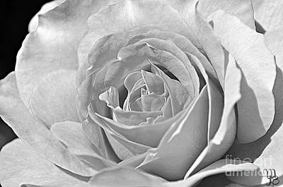 Photograph - Rose In Black And White by Mindy Bench