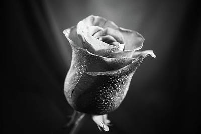 Photograph - Rose In Black In White In Light by Lilia D