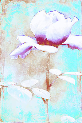 Photograph - Rose In Blue by Lali Kacharava