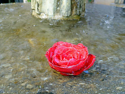 Photograph - Rose In Fountain by Robert Meyers-Lussier