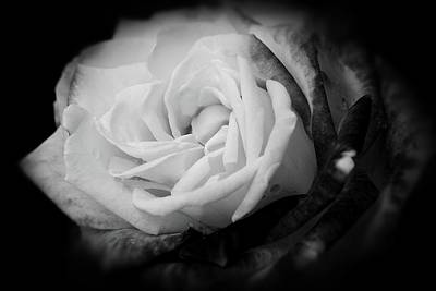 Photograph - Rose In Full Bloom by Angie Tirado