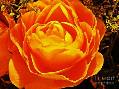 Photograph - Rose In Orange by Sarah Loft