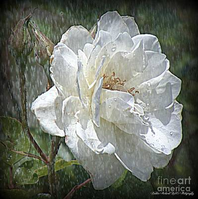 Photograph - Rose In The Rain  by Bobbee Rickard